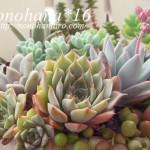 nonohana色のお庭♪多肉植物の寄せ植え
