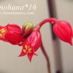 多肉植物 かわいいお花が咲いてます♪