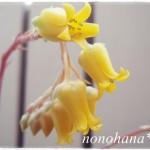 花うららの花まつり☆