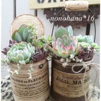 母の日のプレゼントにエレガントシックな多肉植物の寄せ植え☆