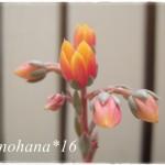 プニータのお花が咲きました♪