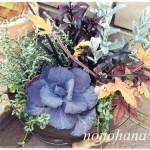 新年お初☆ お花の寄せ植え 大人女子風♪