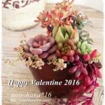 ハッピーバレンタインな多肉植物の寄せ植え ☆2016☆