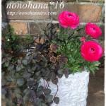 花々の寄せ植え☆ ラナンキュラスが満開♪
