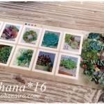 多肉植物のグリーティング切手☆