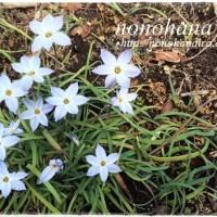 草花達に春の目覚め♪