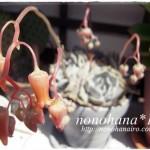 四つ子のリラシナ☆ お花がいっぱい咲いています♪