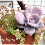 ペンダンドルム×エルネスティの花