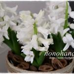 咲いた~♪ 純白なヒヤシンスが開花です☆