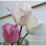 BIGリメ缶inチューリップ☆ 枝咲きチューリップが咲きました♪