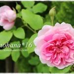 お庭一面のフランスギクとバラ~♪