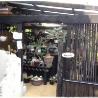 海を感じられる多肉植物のお店☆ Lari-goさんへ♪